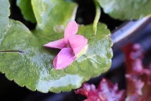 Tiniest little violets I've ever seen