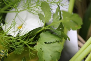 As well as coriander, fennel, parsely and ...
