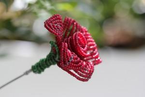 The reddest flower in my garden