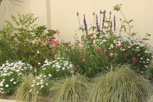 Happy with Carex and Salvia
