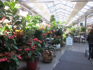 First look at the potted plant section