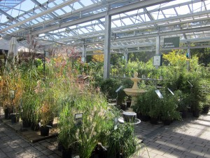 Beautiful grasses - a stunning display