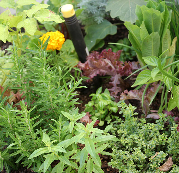In the Herb planter in December