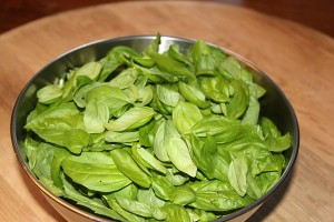 Six cups of Basil, ready for turning into Pesto