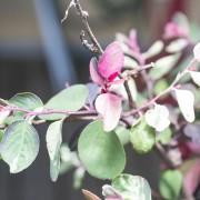 03 Garden colour 08