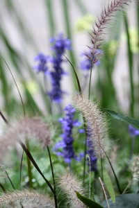 Love the Salvia and grasses