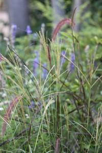 Love all the grasses