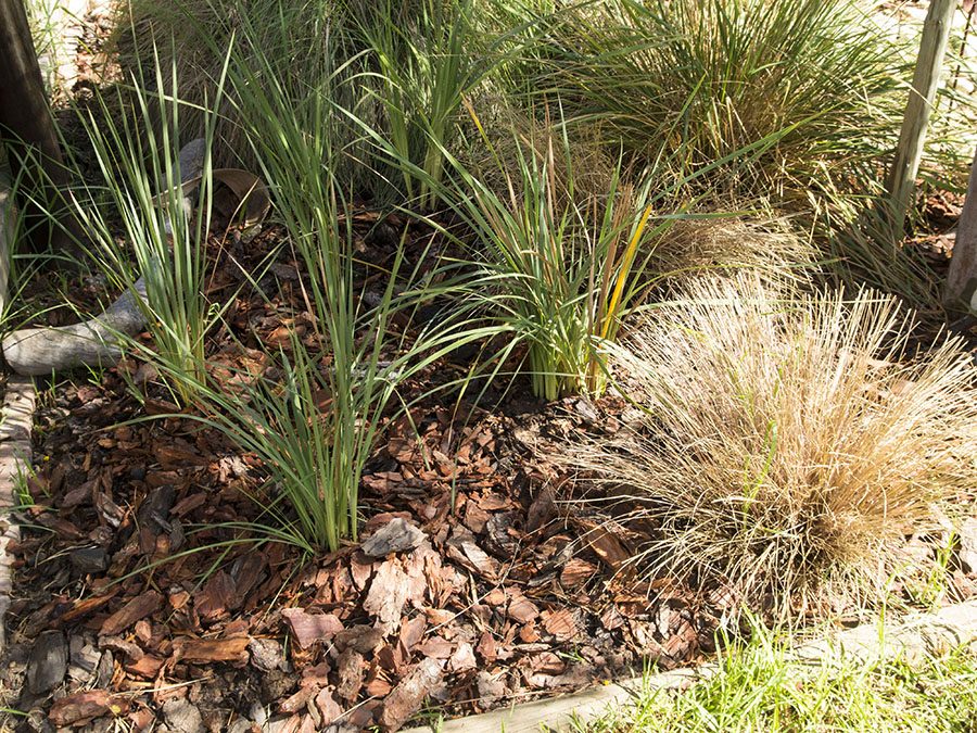 Earth day clean up by the gardening blog for Water wise garden designs south africa
