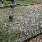 07 Hail storm 06