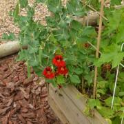 October garden 24
