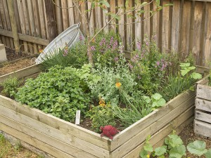 Garden revamp for water wise gardening by the gardening blog for Water wise garden designs south africa