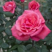 May Garden07