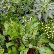 Food Garden 10