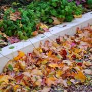 Autumn Day Loveliness