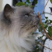 Aren't I a beautiful cat?