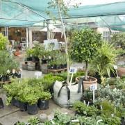 Harry Goemans Garden Centre