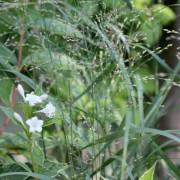 Few words Wednesday - Grasses