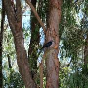 In the massive Pepper tree