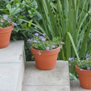 Garden Lessons Learned in Summer