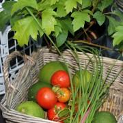 Veggie Harvest in March