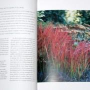 Foliage by Nancy Ondra