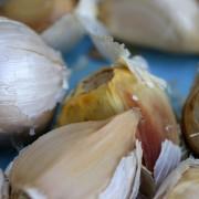 Lovely, plump garlic seed