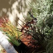 I love the colours and foliage