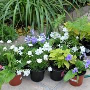 New shade plants